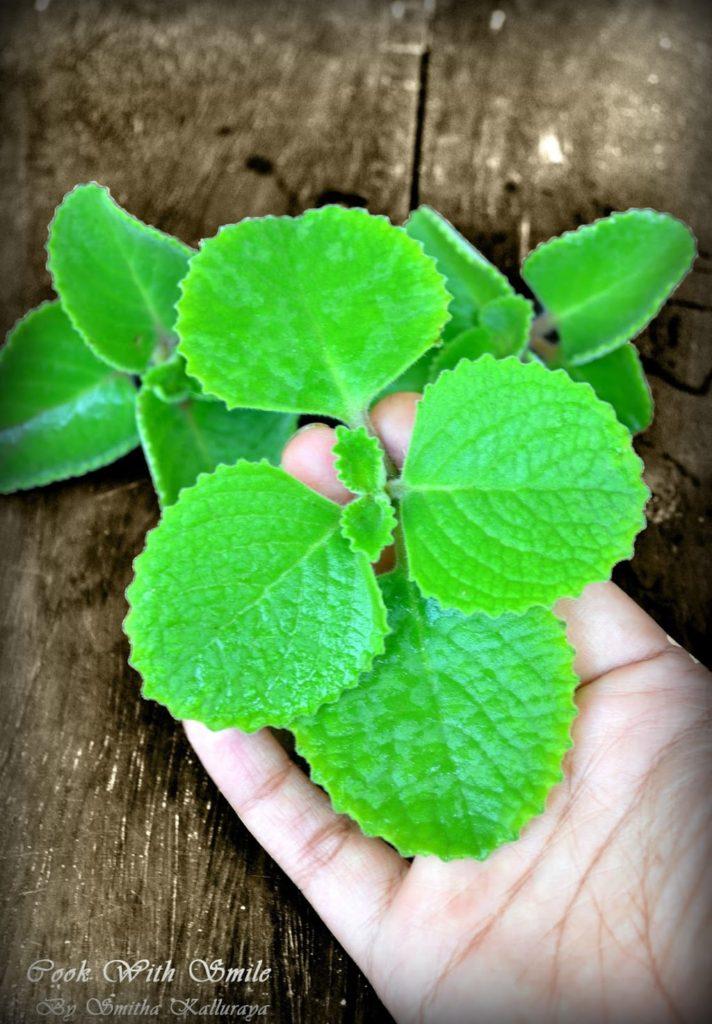 doddapatre leaf